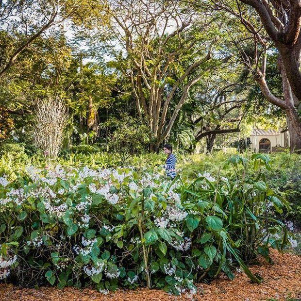 Coral Gables Garden Club