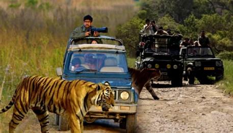 Adventurous Jeep Safari Online Booking in Jim Corbett National Park