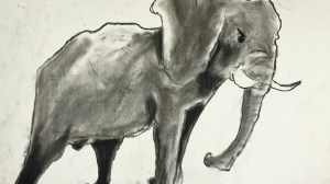 Charcoal Elephants 6th grade and up