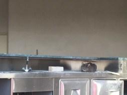 A Chiugiana proseguono i lavori per il Centro Attività Motorie, al momento opera incompiuta 1