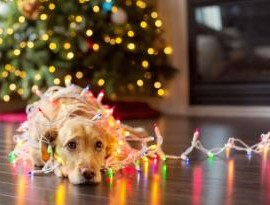 dog-lights