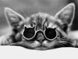 animali congiuntivite cosa fare gatto patologia veterinario 4zampe corciano-centro