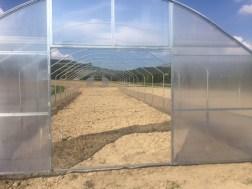 Progetto mense scolastiche: negli orti di Mantignana costruite le prime serre 3