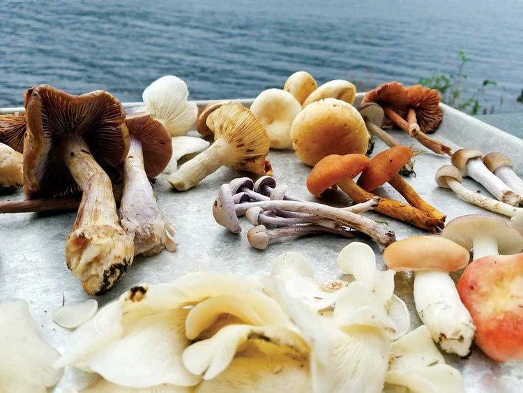 Cordova Fungus Festival