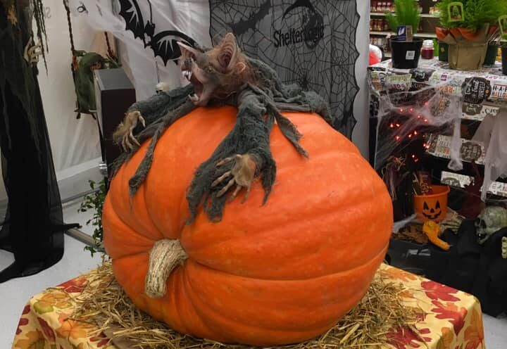 Win the Giant Pumpkin Contest