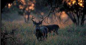 supplemental feeding program for deer