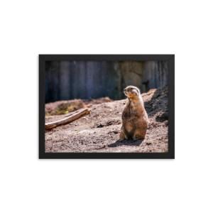 """Proud Prairie Dog"" 12x16 framed poster print with black frame"