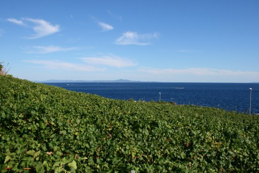 vineyards-in-hvar