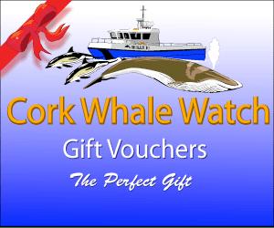 Whale Watching Gift Vouchers from Cork Whale Watch, West Cork, Ireland