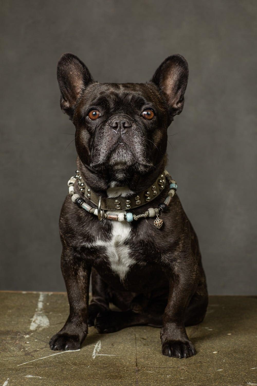 Porträt Hund