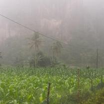 Hoedjan (regen) in de sawah, onderweg naar de Haraukloof.