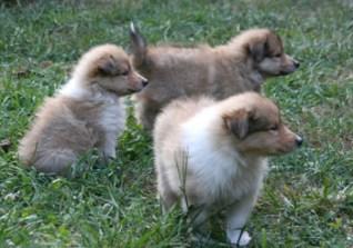 puppies bis 2
