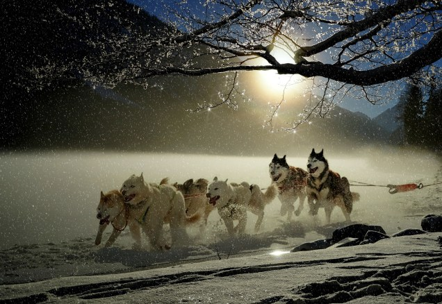 dogs-2921382_1920
