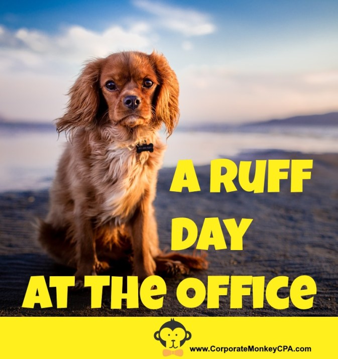 A Ruff Day At The Office - Pet-Friendly Workplace Policies