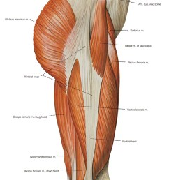 right thigh muscle diagram [ 820 x 1267 Pixel ]