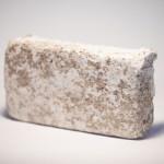 Mycelium Design – NWO Grant