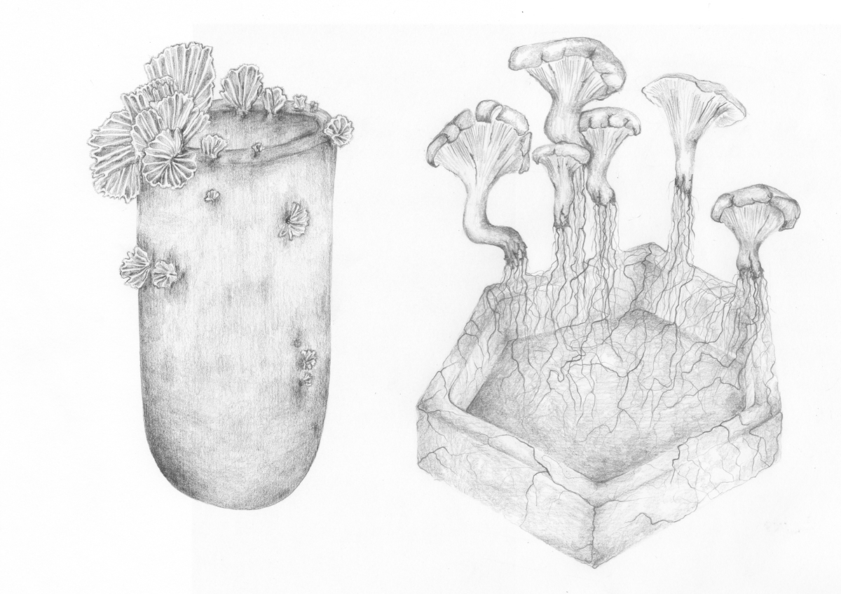Officina Corpuscoli - Maurizio Montalti illustration fungal objects combined