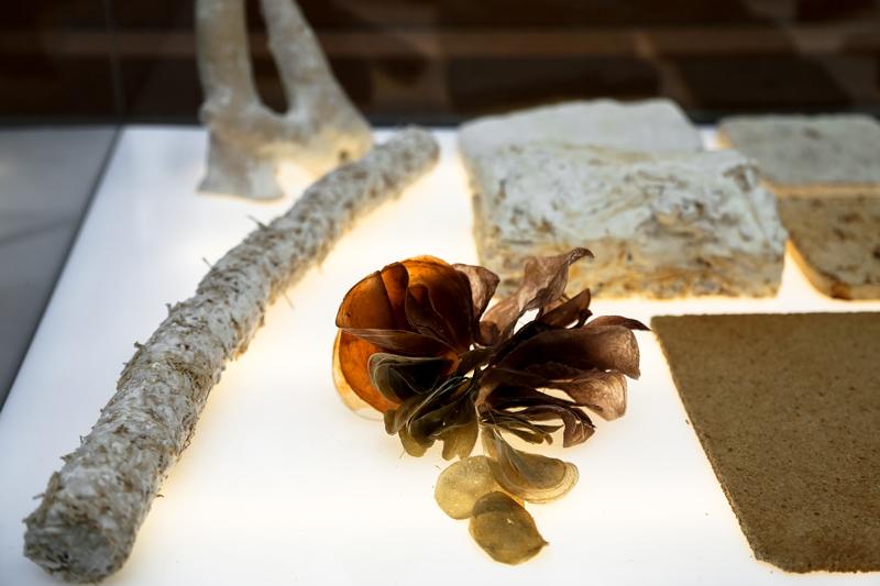 Fungal-Futures---Materials-Samples7-©Officina-Corpuscoli-_-Maurizio-Montalti