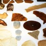FUNGAL FUTURES 02 | Growing Domestic Bio-Landscapes  @Museum TwentseWelle