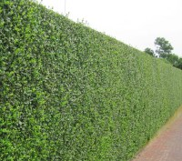 Privacy Trees Related Keywords - Privacy Trees Long Tail ...