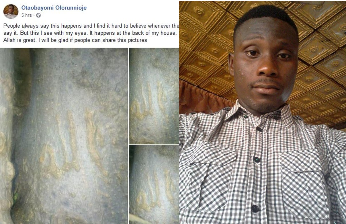 Man finds an inscription on a tree that formed Allahu in Ibadan, shares photos