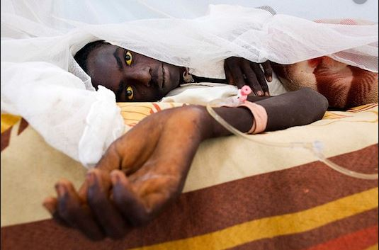 Yellow fever outbreak kills 29 people in Bauchi