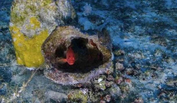 Ativista diz que exploração de petróleo ameaça corais da Amazônia