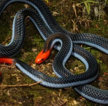 Cobra-Significado Espiritual