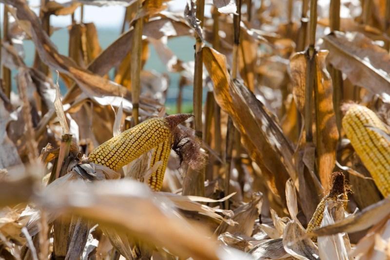 Apromilho estima que 15% dos agricultores ainda têm produto disponível no RS