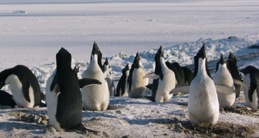A fun, plucky adventure | Disneynature's PENGUINS: Review