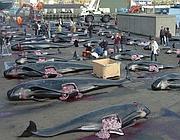 Le balene allineate sulla banchina dopo essere state sgozzate (Reuters)
