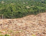 Deforestazione in Amazzonia (da Spiegel)