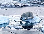in Alaska è sempre più evidente lo scioglimento dei ghiacci