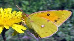farfalla_natura