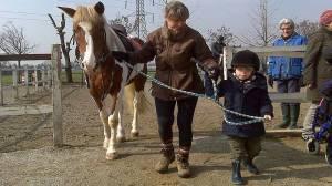 tecnico equestre, cavallo, ippoterapia