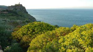 Un sentiero dell'isola di Capraia
