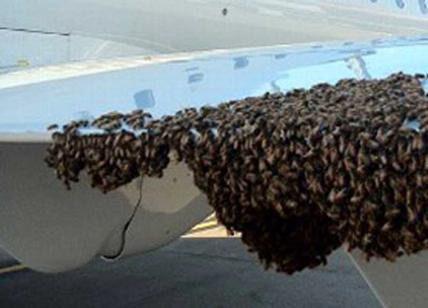 Roma, sciame d'api blocca aereo diretto a Catania: invaso il rullo di carico dei bagagli