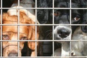 Catania, 16 cani in gabbia dentro un furgone scoperti dalla Polizia stradale: denunciato il trasportatore