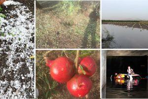 Maltempo nel Catanese, si fa la conta dei danni dopo il nubifragio di ieri: a rischio la stagione agrumicola