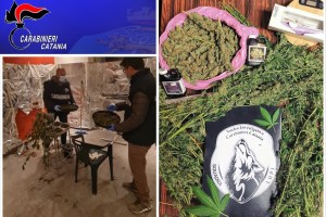 Catania, carta argentata e ventilatori per essiccare la marijuana in casa: 41enne arrestato in flagranza (VIDEO)