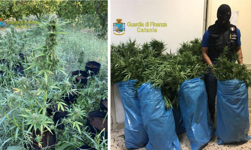 Lentini, GdF scopre piantagione domestica di marijuana: arrestato fratello di un capoclan