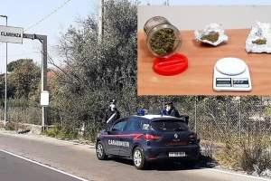 San Pietro Clarenza: mele, pere e marijuana: pastore tedesco King smaschera fruttivendolo 46enne