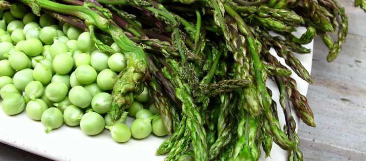 Clima, Coldiretti: asparagi e fave sui banchi con un mese d'anticipo: l'inverno anomalo manda in tilt le colture