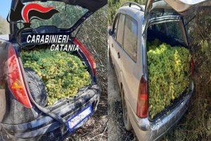 Caltagirone, ladri di uva da tavola abbandonano l'auto col bottino: nella frazione di Santo Pietro