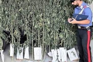 I Carabinieri della Stazione di Guardia Mangano hanno arrestato nella flagranza un 56enne di Acireale, poiché ritenuto responsabile di produzione illecita di sostanze stupefacenti.