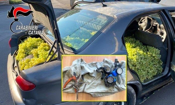 Catania, furti nelle campagne: in due avevano in auto 300 kg di uva. Donata alla Caritas