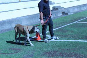 Catania, al carcere minorile concluso il corso di educazione con gli animali: progetto con l'Asp