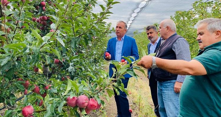 Çorum'dan 14 ülkeye elma ihracatı