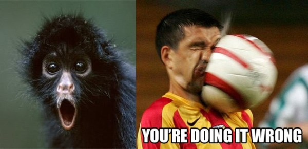 OMG Monkey - You're Doing it Wrong Meme