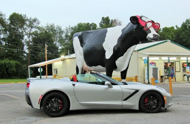 C7 (cow stop)